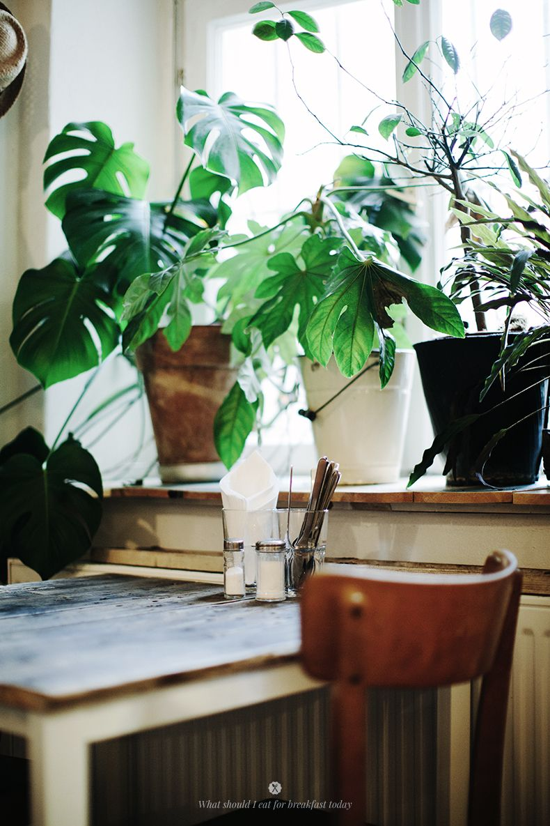 Eat berlin salumeria lamuri home pinterest pflanzen gr npflanzen und zimmerpflanzen - Zimmerpflanzen berlin ...
