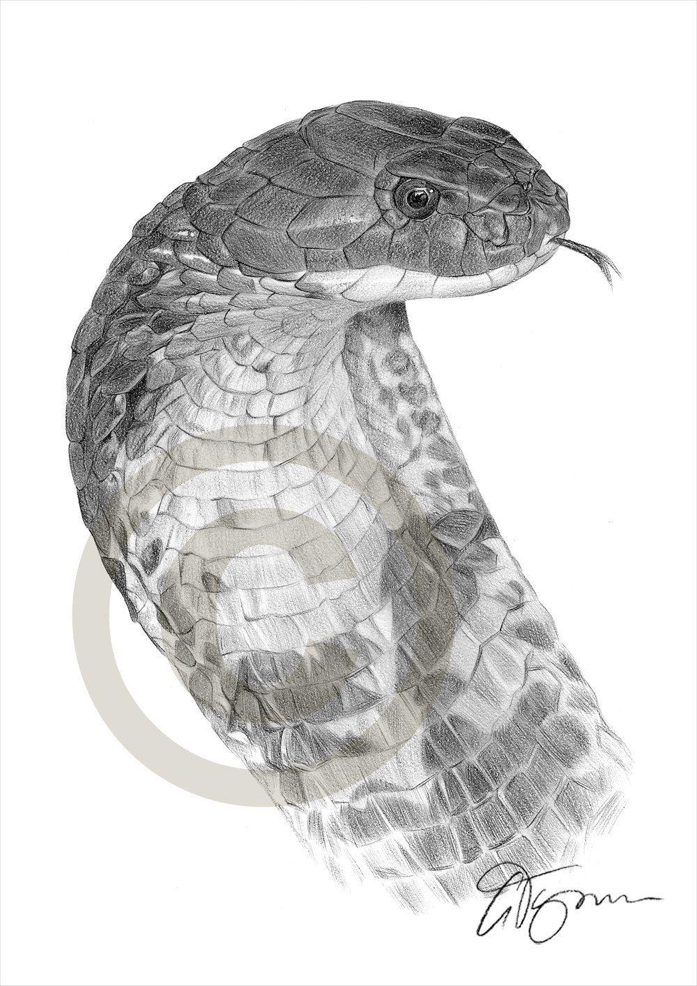 Snake king cobra pencil drawing print a4 size artwork