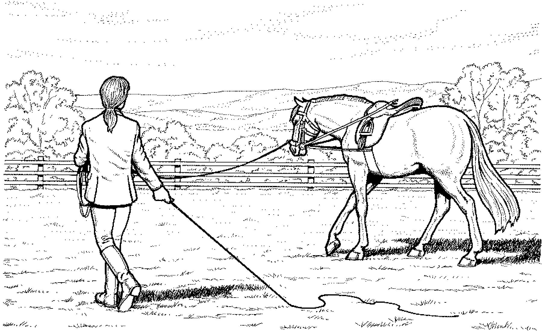 Ausmalbilder Pferde Mit Reiterin - Ausmalbilder Pferde Kostenlos Zum ...