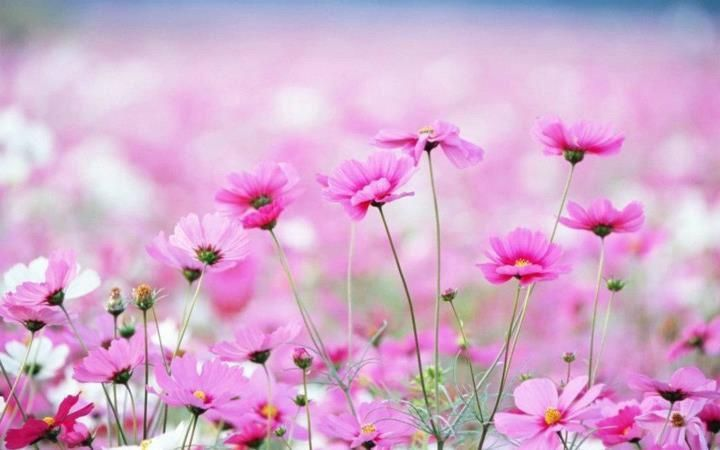 Maria On Twitter Beautiful Flowers Wallpapers Pink Flowers Wallpaper Amazing Flowers April flores best and new hd wallpaper