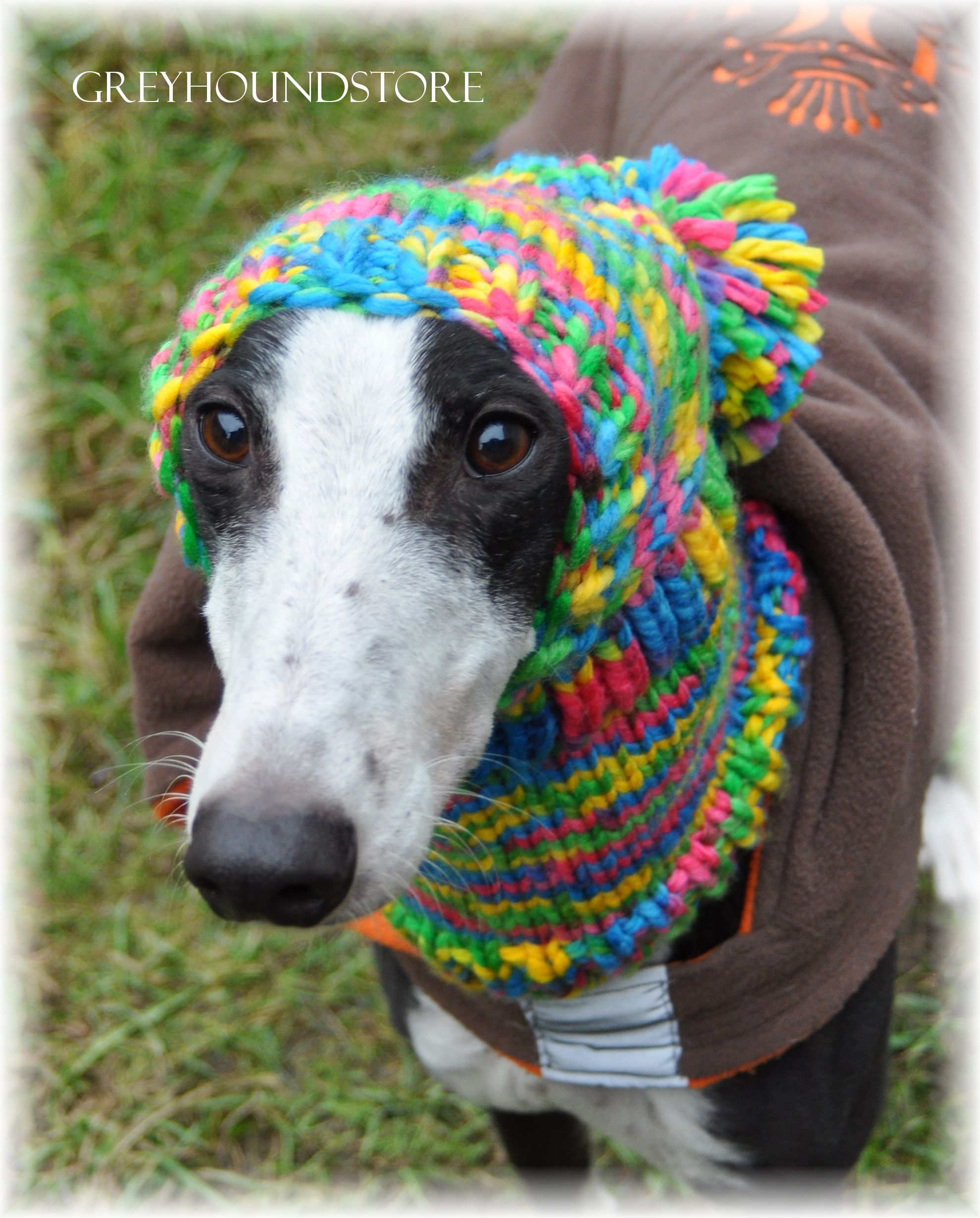 Woolen cap for greyhoundgalgolurcher facebook lurcher and animal bankloansurffo Images