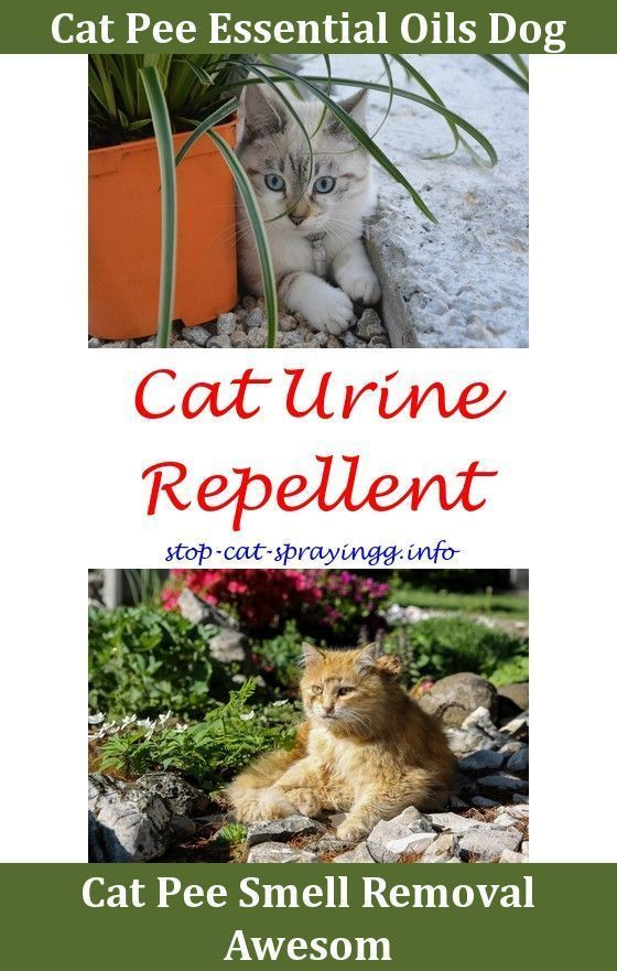 Cat Away Spray Cat Scent Spray Do Female Cats Spray Urine