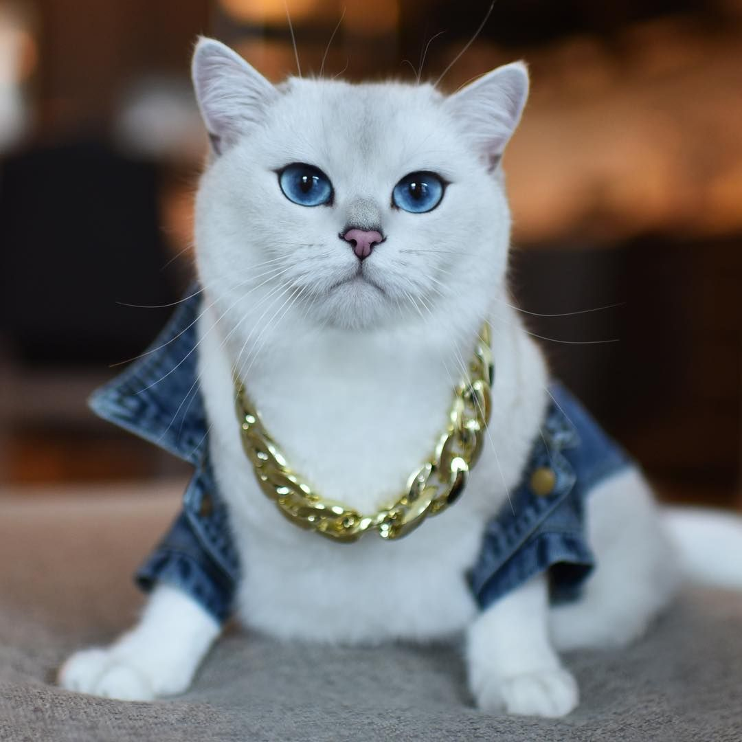 The Only Thing Soft About Me Is My Fluff Gangsta Cute Animals Beautiful Kittens Cats
