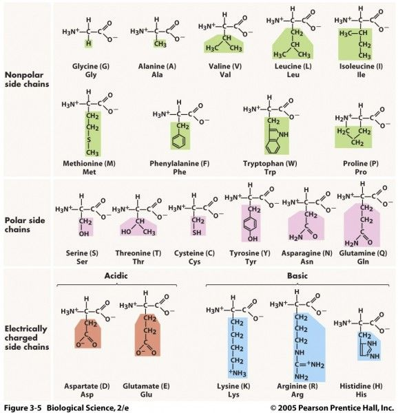 Various Amino Acids Amino Acid Structure Nh3 - C - Cooh Amino - amino acid chart