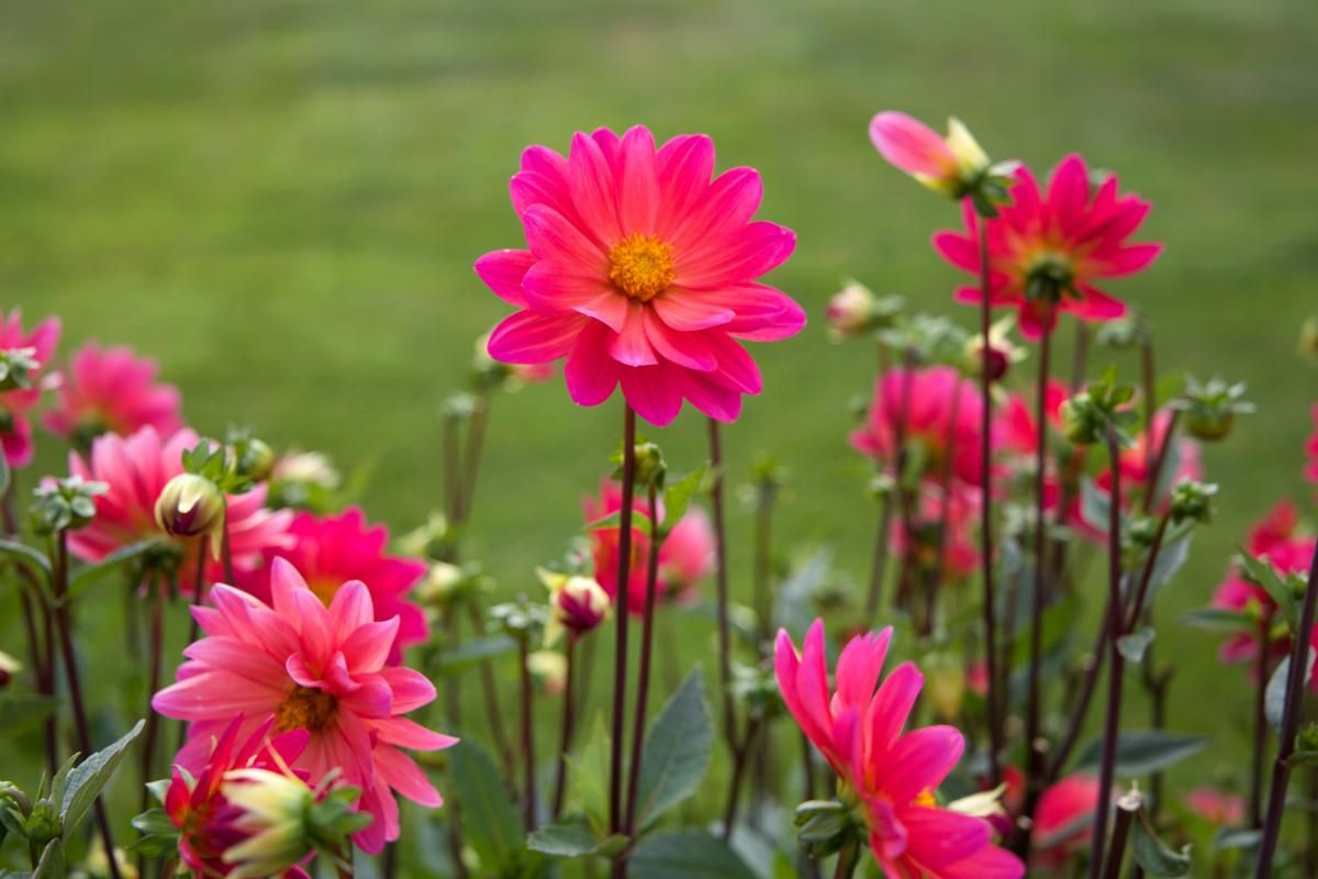 ❕ Flowers colourful colorful plant - download photo at Avopix.com for free    ✔ https://avopix.com/photo/34143-flowers-colourful-colorful-plant    #pink #flower #clover #blossom #plant #avopix #free #photos #public #domain