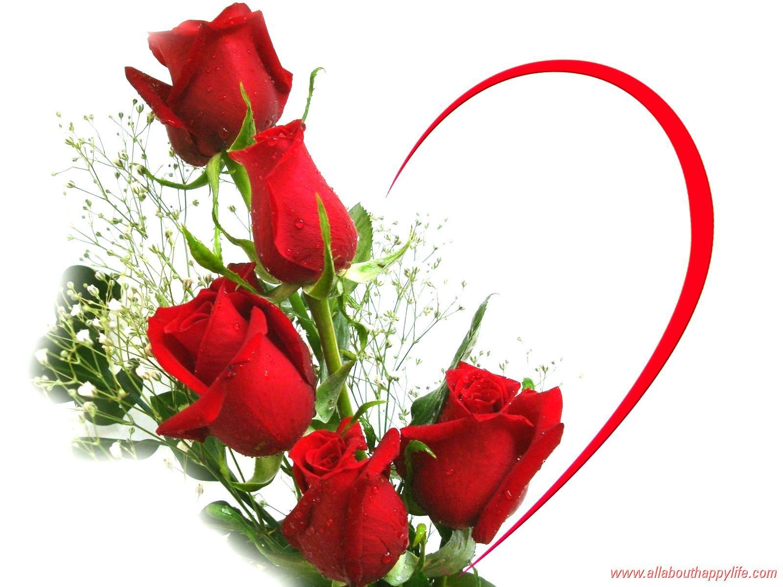rose images with love Red roses wallpaper, Love rose