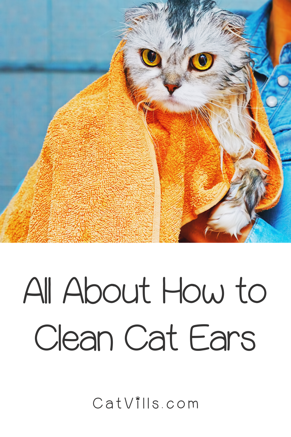 Pin On Cat Health Guide