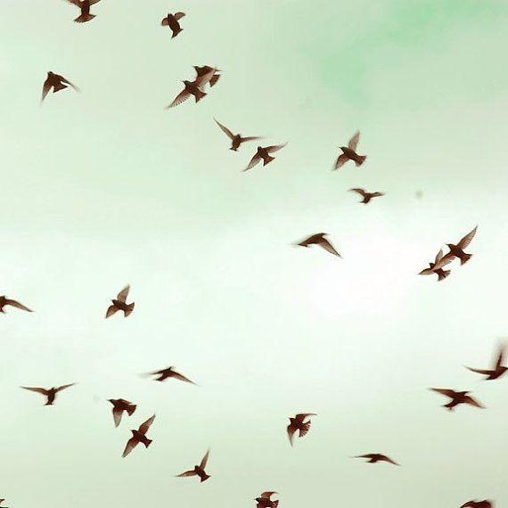 Mint, Green, Blue, Fine Art Photo, Bird Photography, The Birds, 5x5 Print, Spring Sky, Nature Photography
