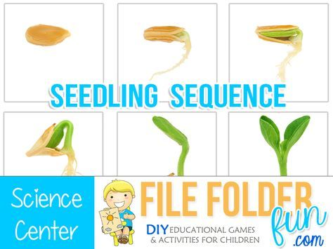 Seed to Plant Coloring and Worksheets | materials