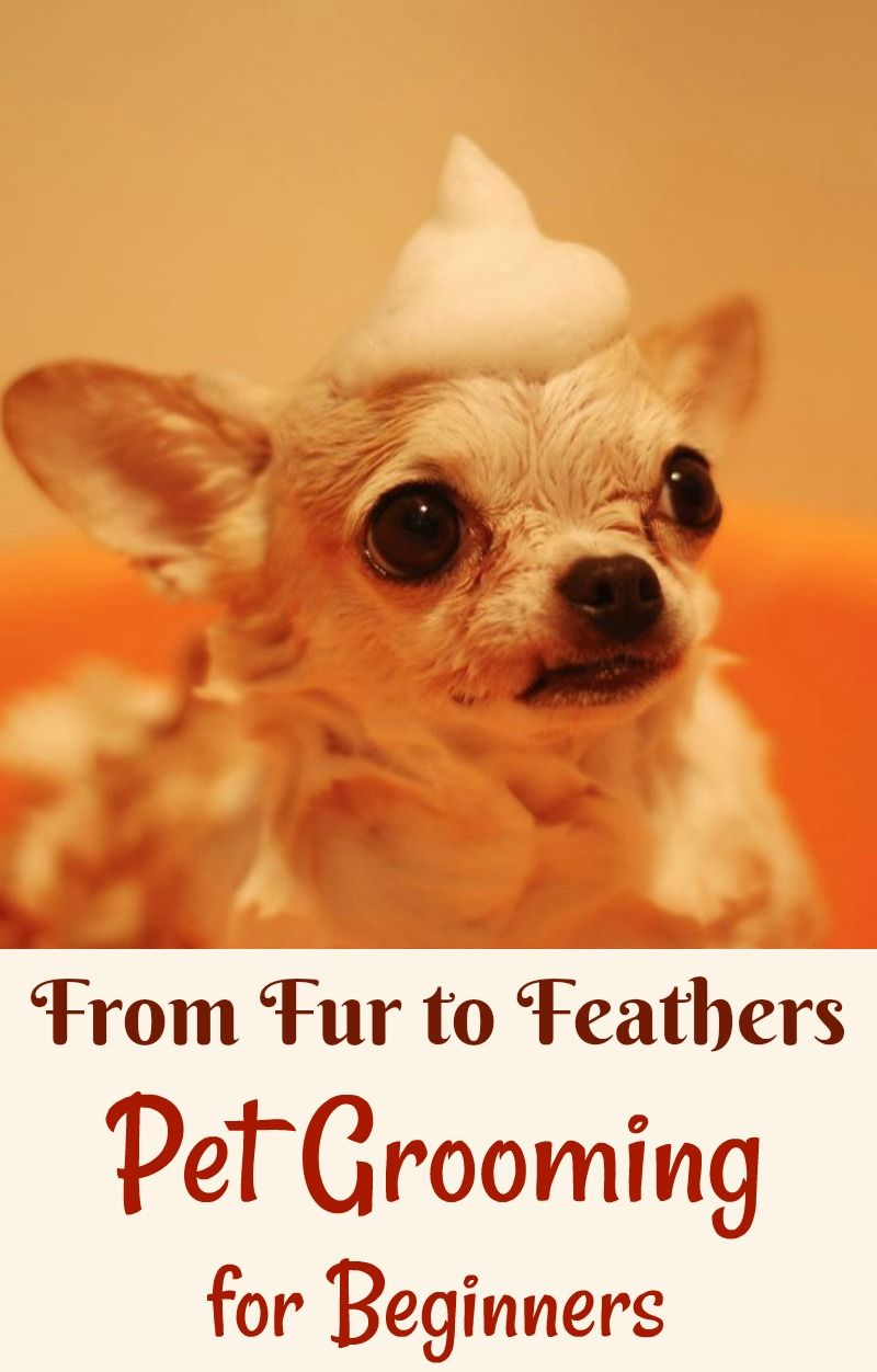 From Fur To Feathers Pet Grooming For Beginners Pet Grooming