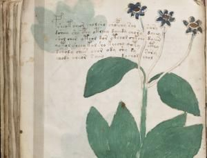 New signs of language surface in mystery Voynich text - physics-math - 21 June 2013 - New Scientist