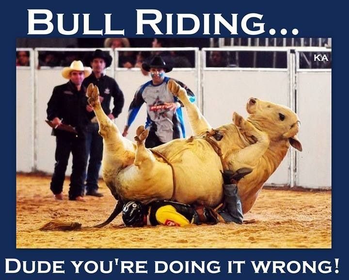 Funny Bull Riding Quotes: Pbr Bull Riding