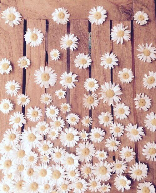 Image Via We Heart It #daisies #flowers #nature