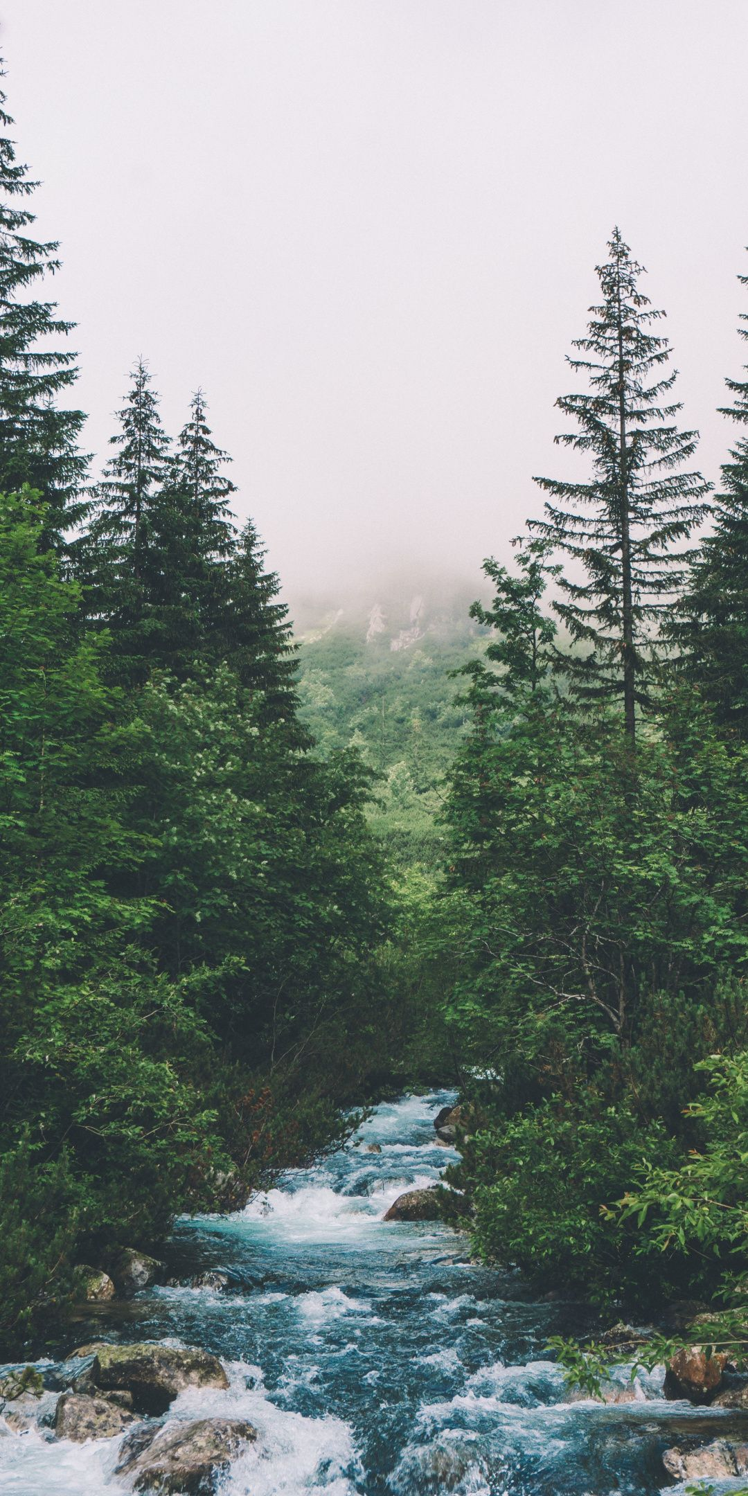 Forest, green trees, water stream, 1080x2160 wallpaper