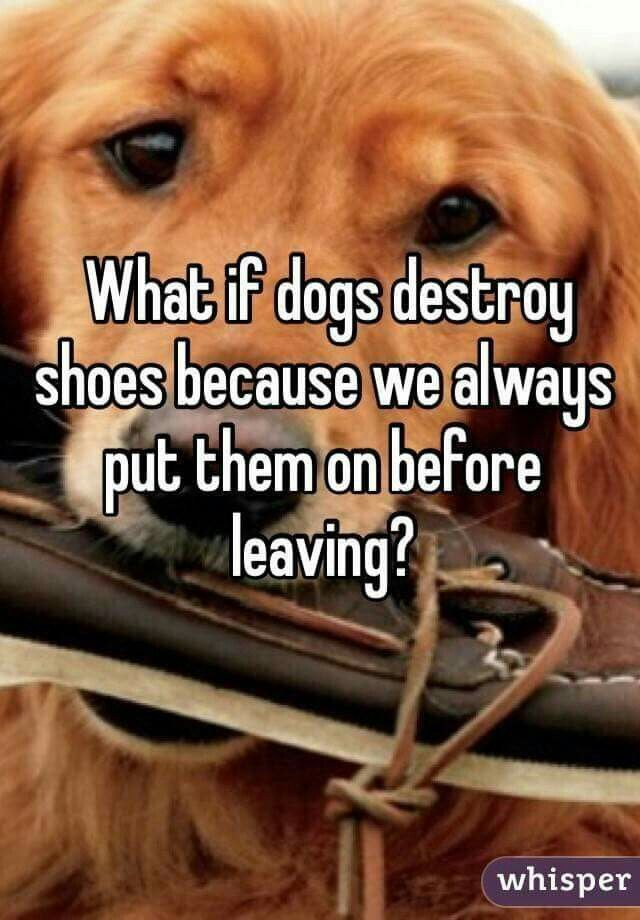 Awww Maybe Dogs Dogmemes Memes Dog Love Cute Dogs Animal Quotes