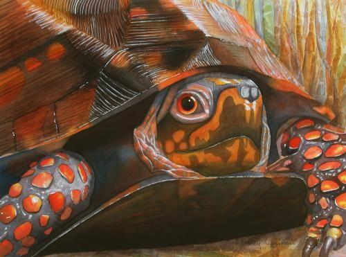Red Eye Marcy Lansman Painting Watercolor Paintings Land Turtles