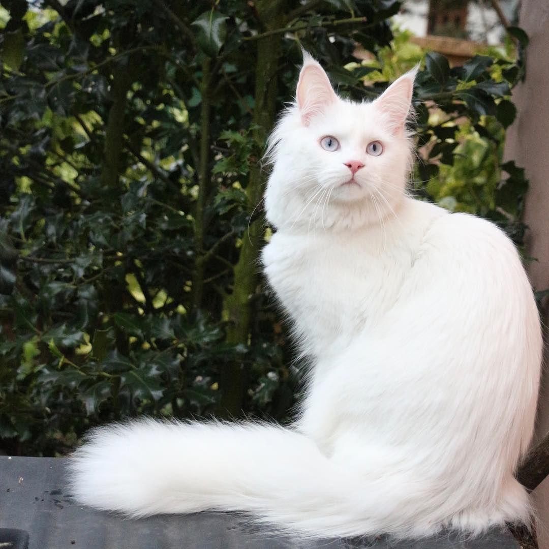 Pin oleh инна di кошки и собаки породистые знаменитые 1