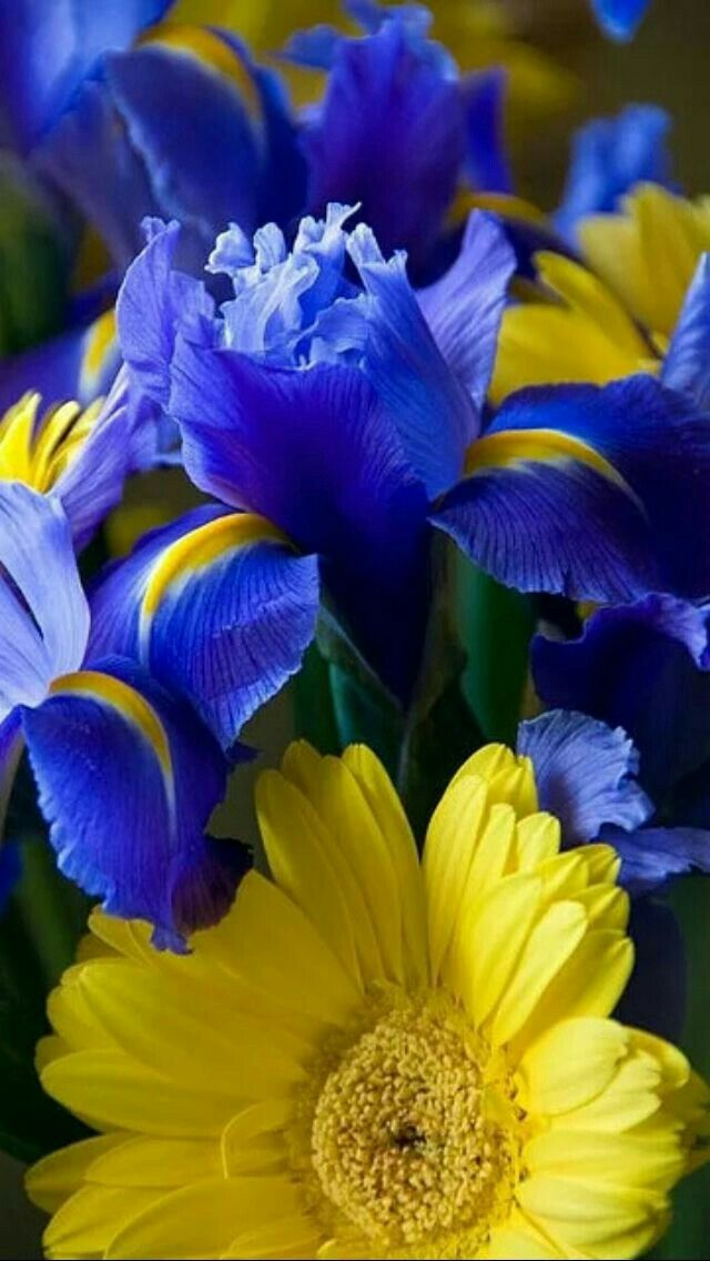 Cobalt blue and yellow flowers blue and yellow or gold pinterest cobalt blue and yellow flowers mightylinksfo