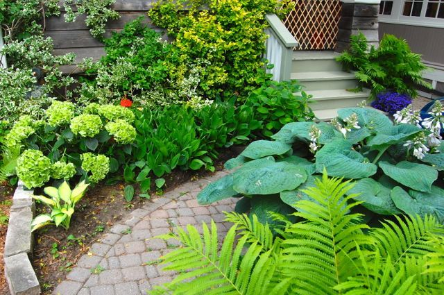 Toronto Gardens: Small-space tricks from two tiny Toronto gardens   Small space gardening, Toronto gardens, Small gardens