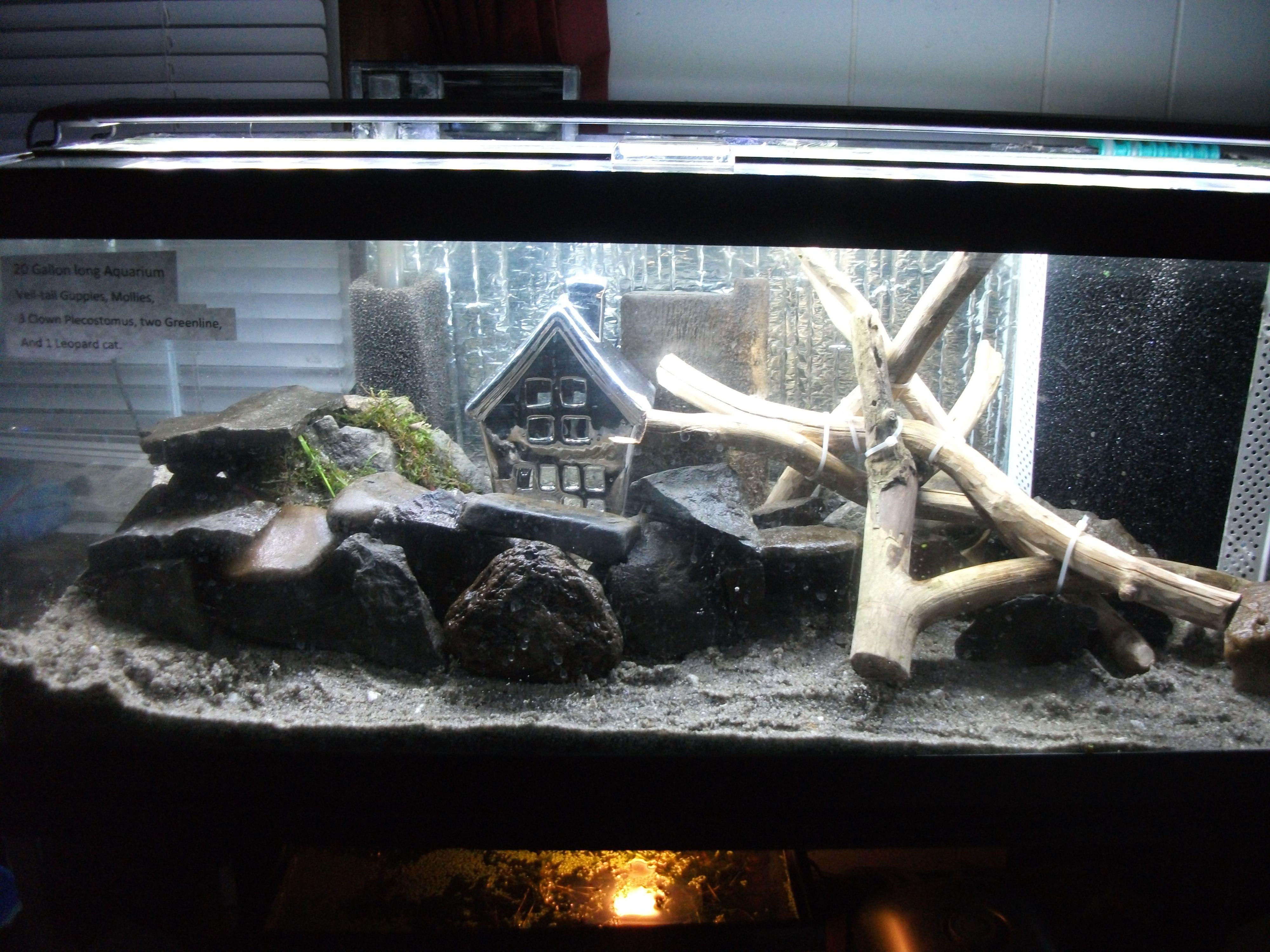 Kribensis tank