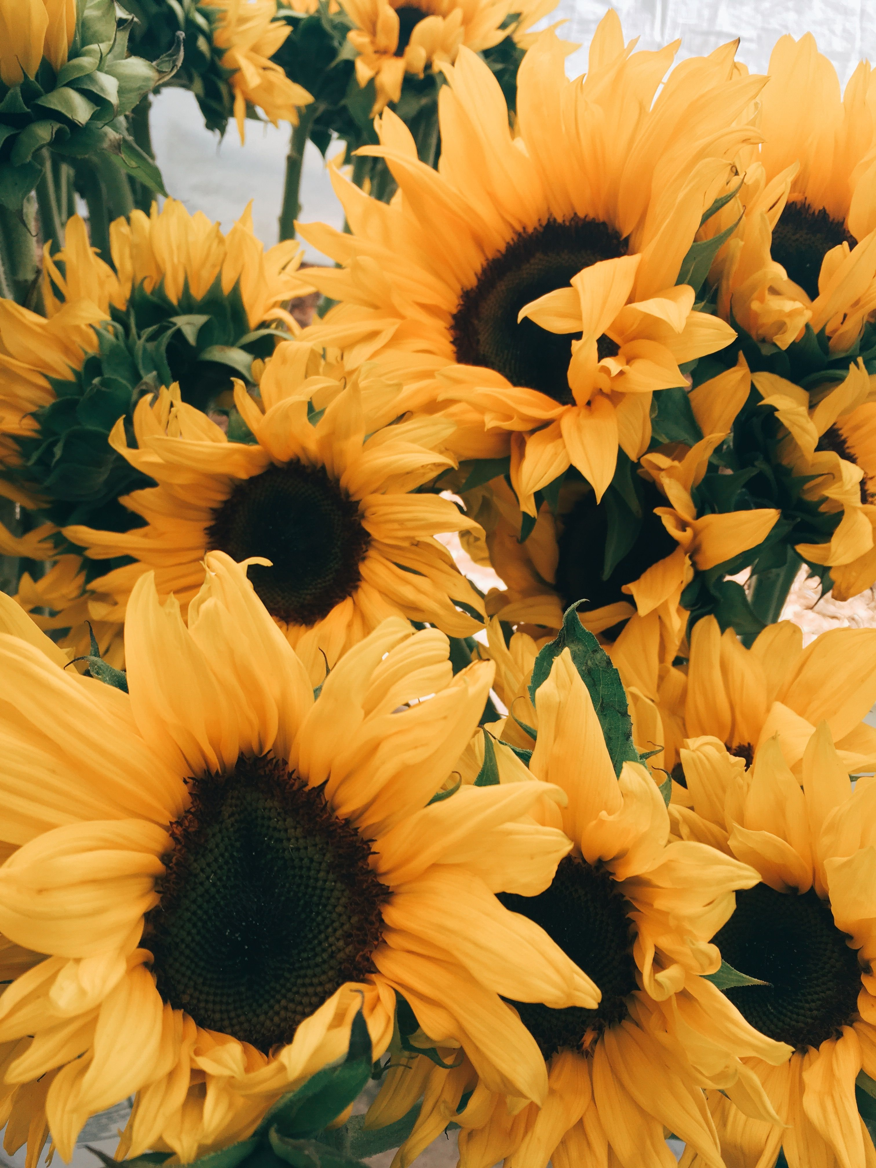 Cute Aesthetic Sunflower Wallpaper