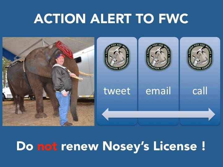 NEW Tweet sheet for Nosey via Save Nosey Now! Urge Florida Fish & Wildlife Conservation Commission (FWC) to NOT RENEW Nosey's FWC Permit!