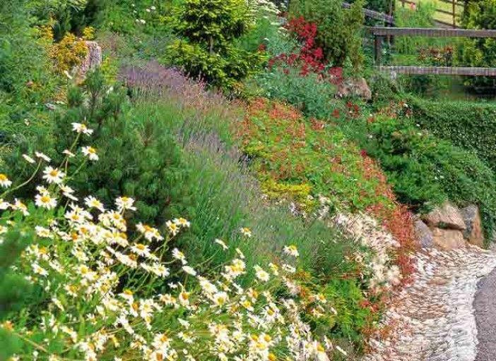 Couvre-sol, vivaces et plantes alpines pour jardin en pente ...