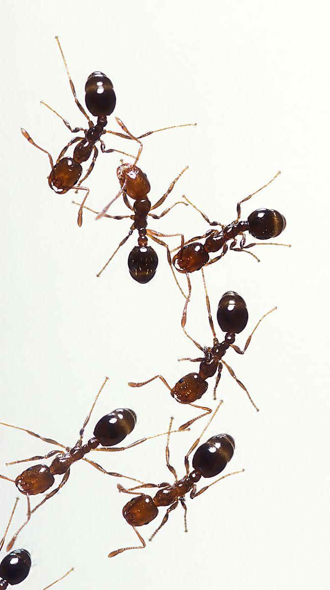 Repel ants - Ants seem to hate vinegar. Spray it in cracks, around ...