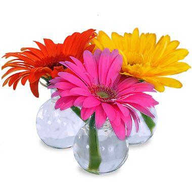 Gerbera Daisy Centerpieces Pictures Gerbera Daisy Bud Vases