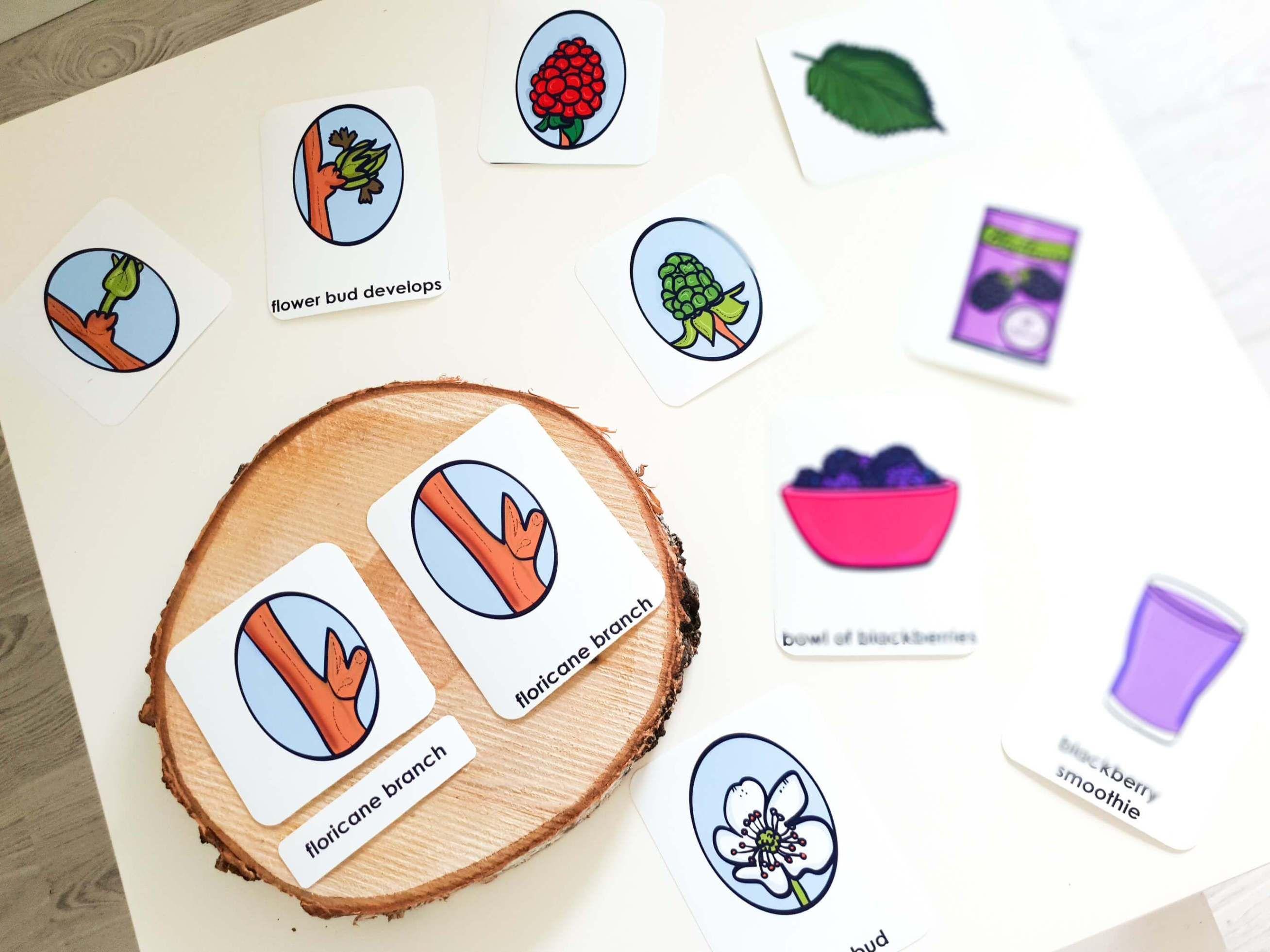 Montessori Inspired Blackberry Life Cycle Activities