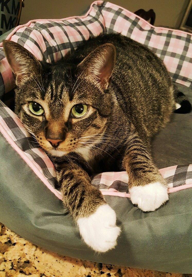 Pin by Nancy Frank on Pets & Animals Cat vs cat, Cute