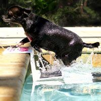 Paws Aboard PoolPup Safety Steps