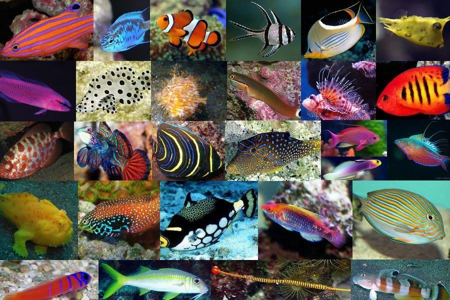 Inspira Boards Saltwater Fish Fish Collage Aquarium Design Saltwater Aquarium