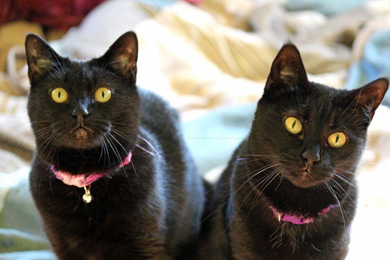 My Girls by AnimalsRForever.deviantart.com on @deviantART