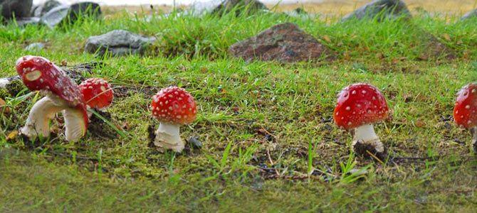 Mushroom photos identification uk hunting blog  also rh pinterest