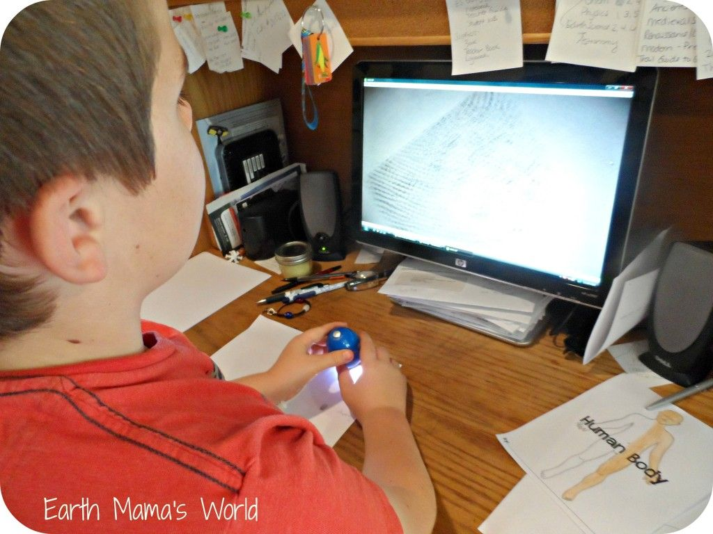 Homeschool Lesson Learning About Skin Human Body Unit
