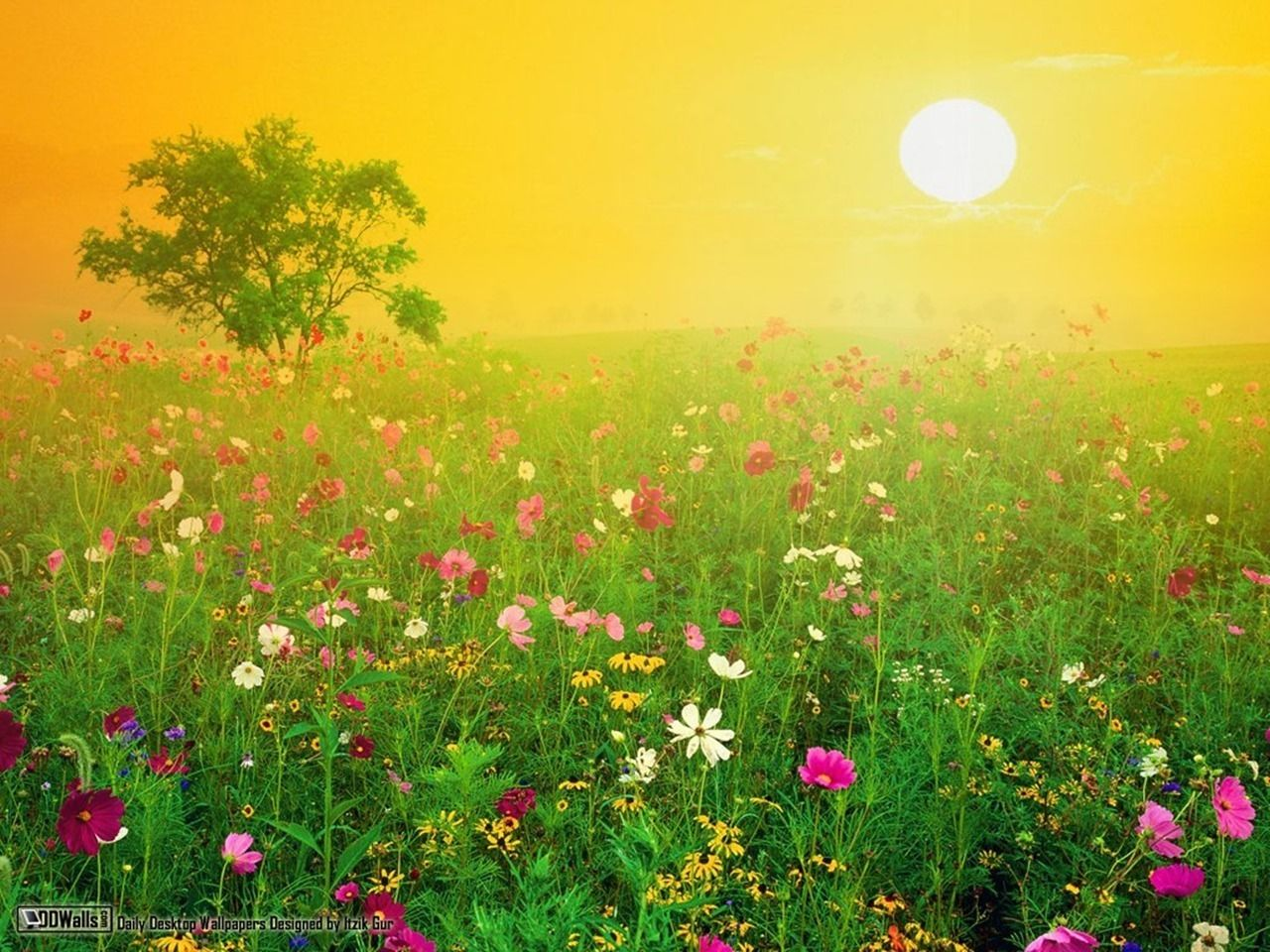 Amazing Nature Wallpapers Beautiful Images Nature Wildflower Photo Nature