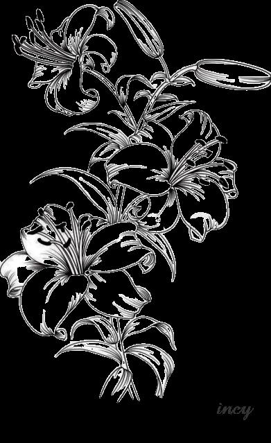 Pin By Nicci Martinez On Beautiful Flower Drawings Flower Sketches Beautiful Flower Drawings Flower Drawing