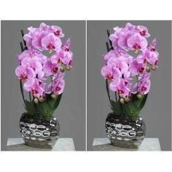 Photo of Artificial orchids