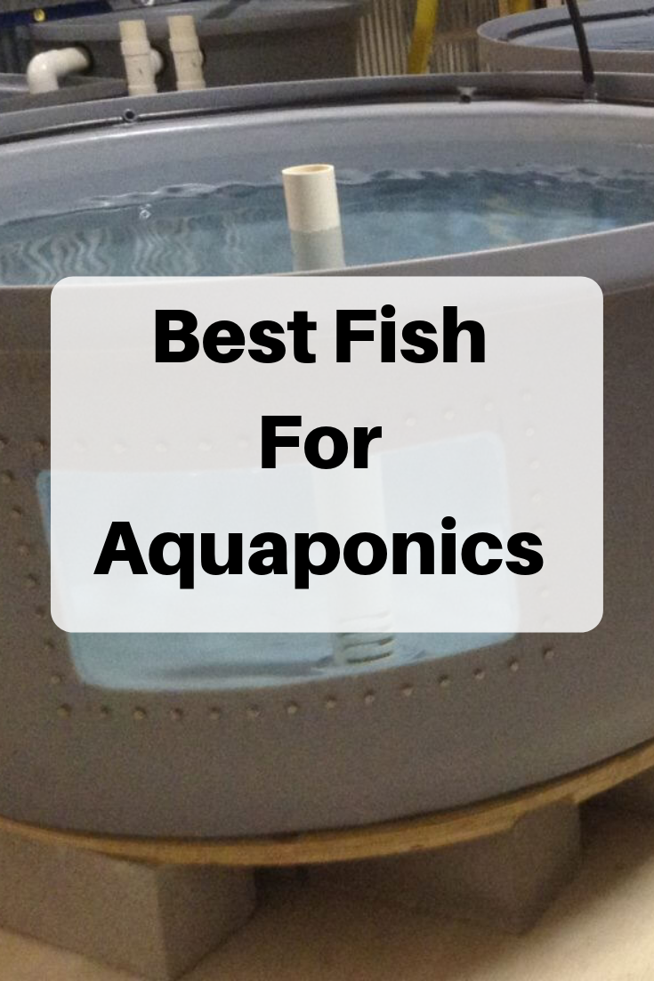 Best Fish for Aquaponics  Choose from 22 Species  HowtoAquaponic is part of Aquaponics greenhouse, Best fish for aquaponics, Aquaponics system, Backyard aquaponics, Aquaponics fish, Aquaponics diy - In this article, You are going to learn which will be the BEST Fish for Your Aquaponics System! Find out which fish are the best and which ones to AVOID