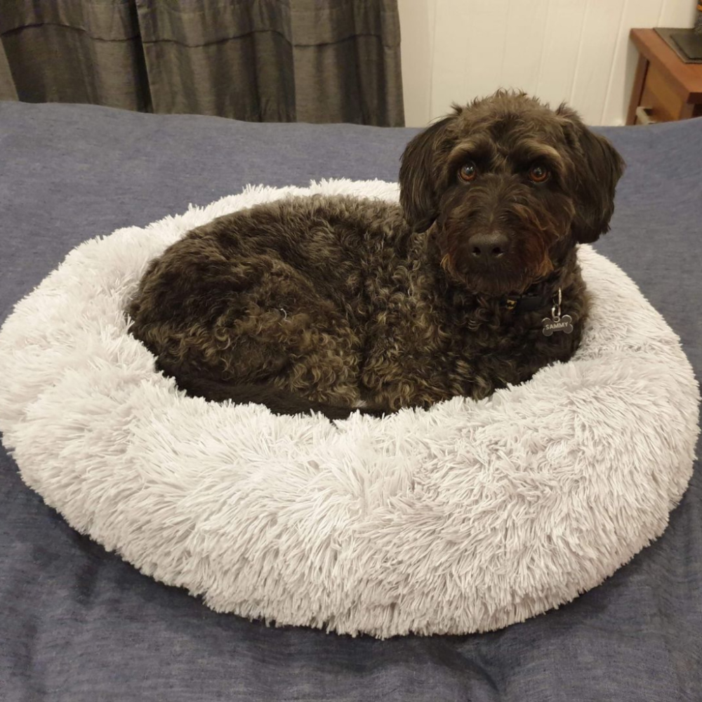 Dog Plush Donut Calming Bed Luxury pet beds, Cool dog