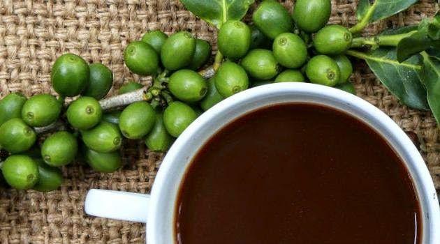 panorama:    Cafe Verde tras grandes beneficios a saude e aj...