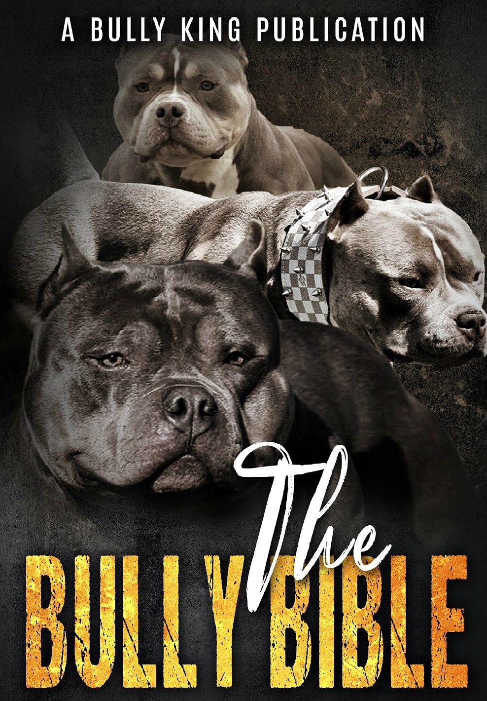 The Bully Bible American Bully Bully Breeds Bully Breeds Dogs