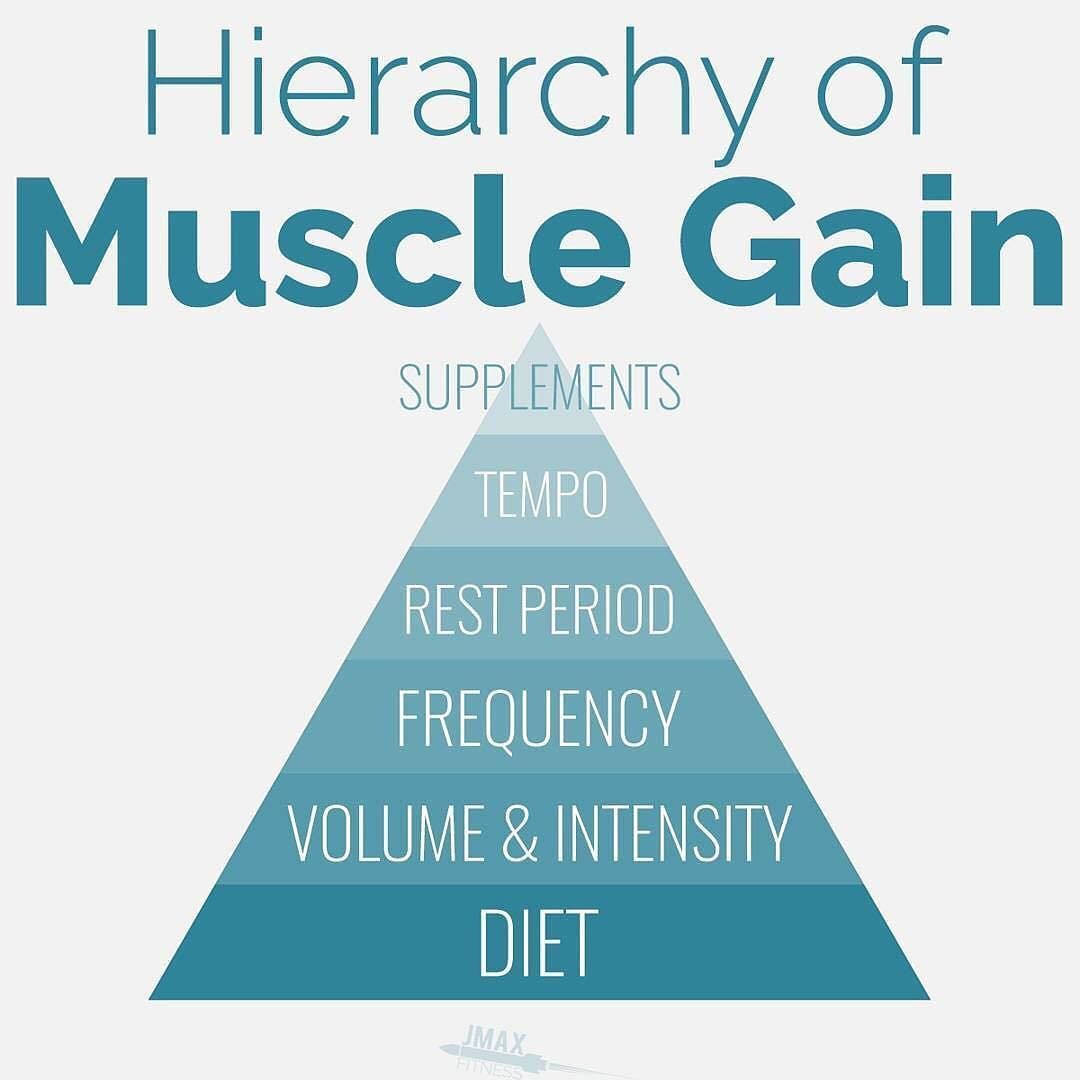 Hierarchy of muscle gain if you want to build muscle you