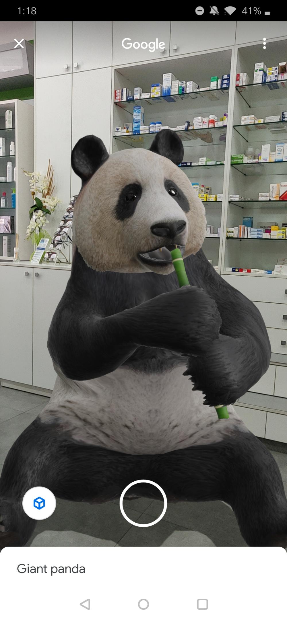 panda 3d model Поиск в Google Панда, Животные