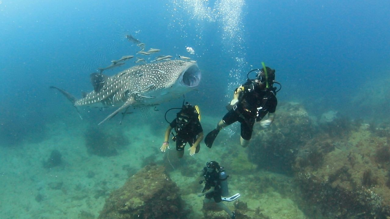 A really friendly baby whale shark wow incredible and