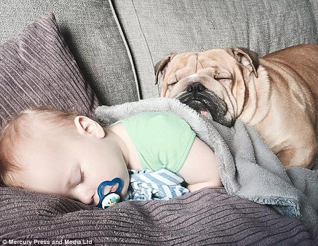 Pin On Bulldog Babysitting