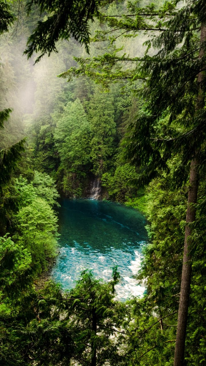 Forest, lake, green trees, nature, 720x1280 wallpaper