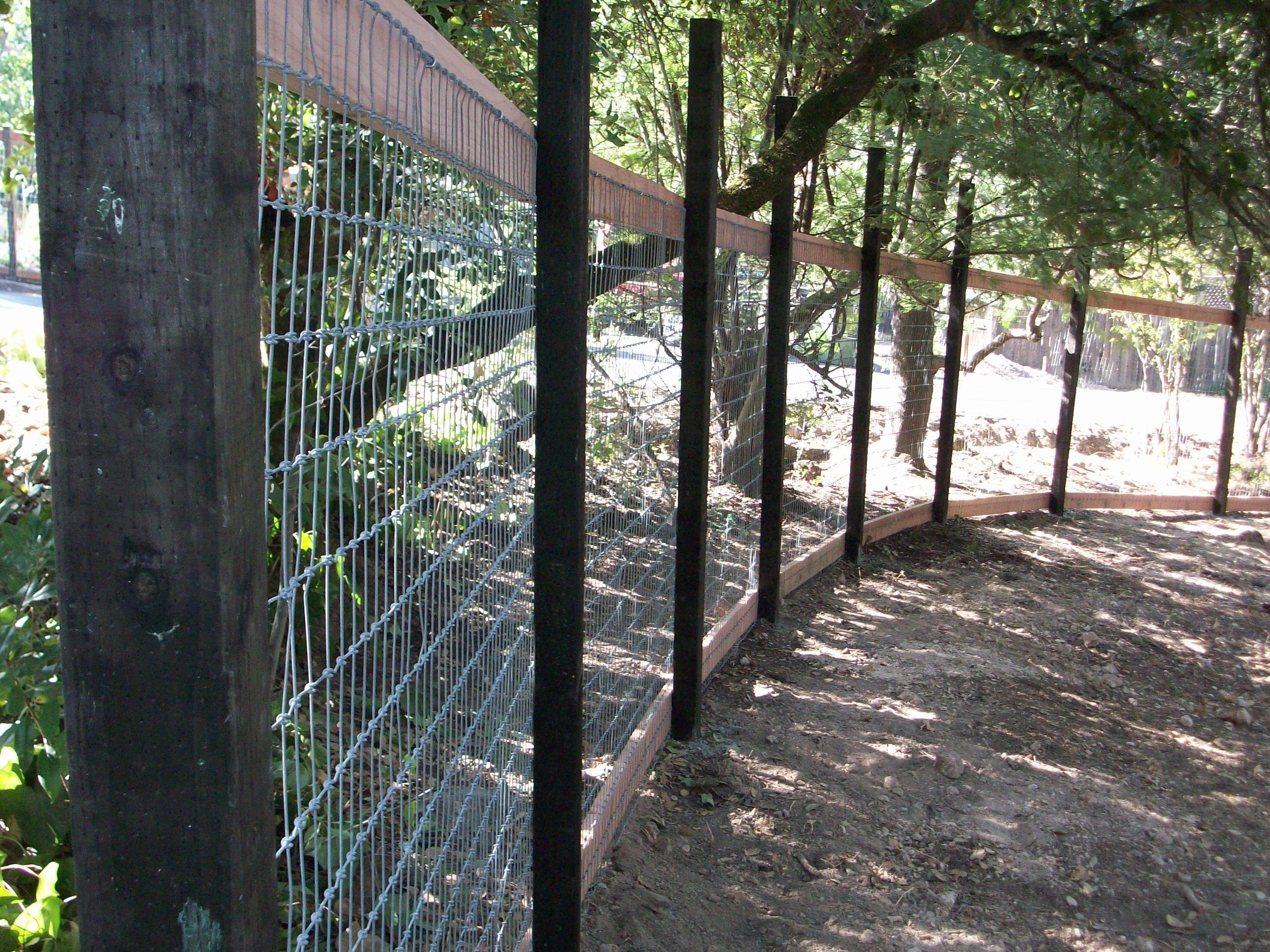 How do i keep deer out of my garden - Keep The Deer Out Of Your Garden With A Wire Fence By Arbor Fence Inc