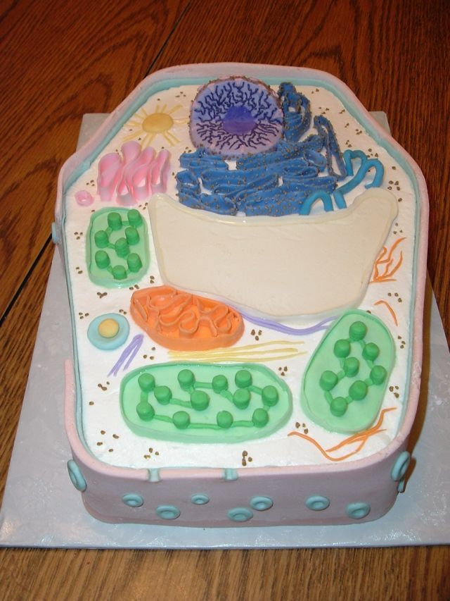 Plant Cell Cake   Plant cell